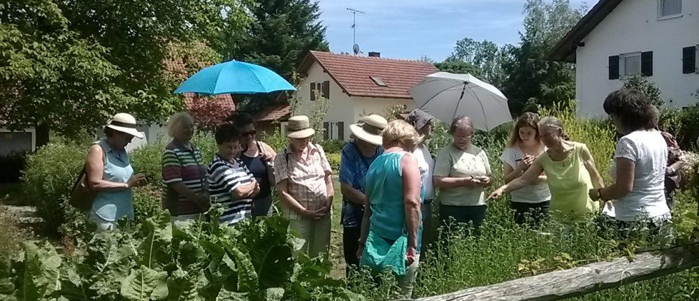 Frauenbund besuchte Wildkräuterführerin